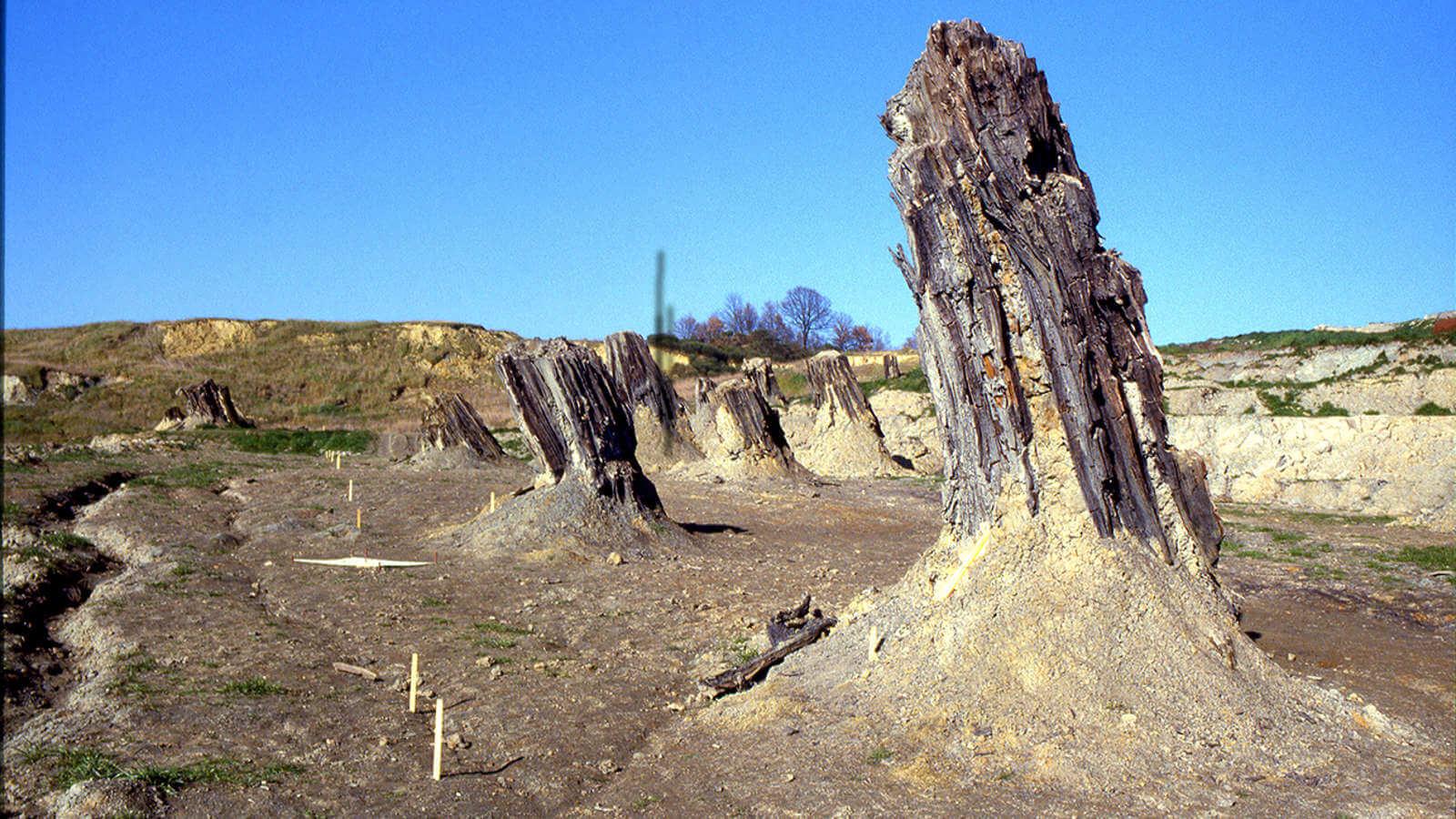La foresta fossile di Dunarobba: Il bosco che si è conservato in legno per milioni di anni senza pietrificarsi.